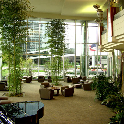 Interior Plants | Interior Plant Landscaping in Dallas | Green House